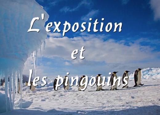 Expo-les pingouins
