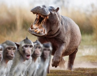 contes africains-hippopotame